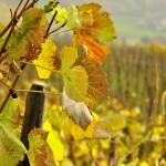 wine_garden_1
