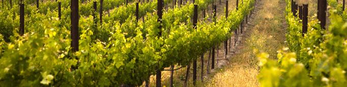 Rumelia бяло вино