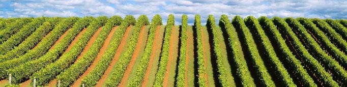 Rumelia бяло вино Шардоне
